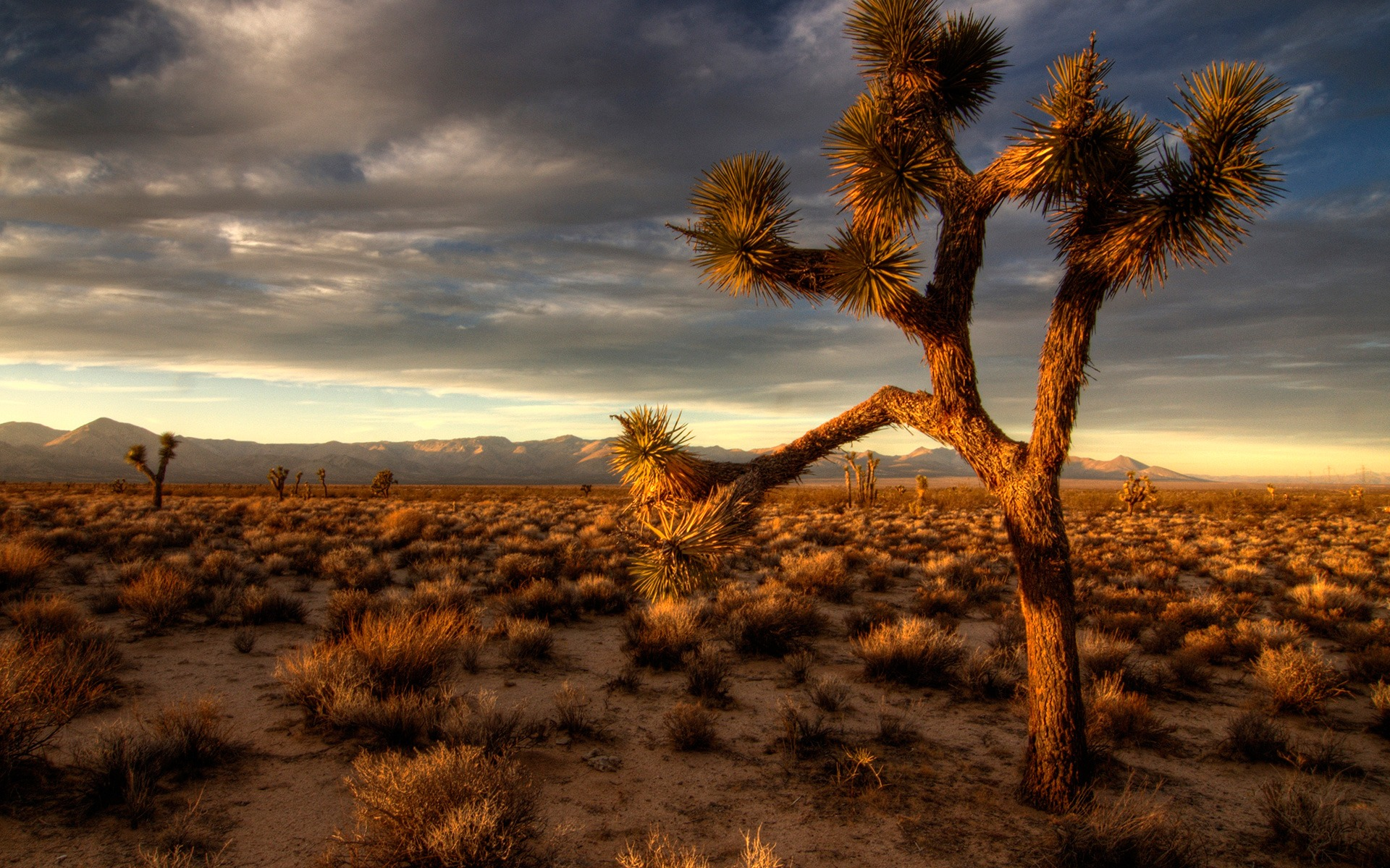 mojave desert scenery wallpaper - photo #13